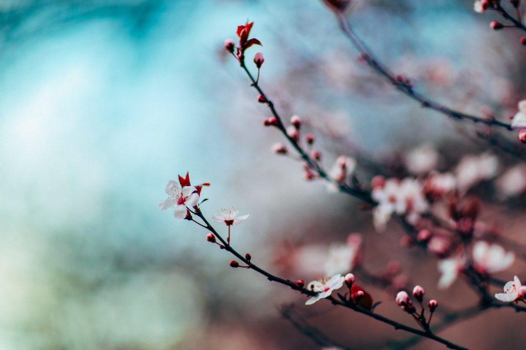 Atelier Ikigaï, un concept de vie japonais pour trouver sa voie